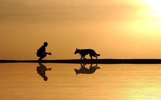 Dog - Tumisu