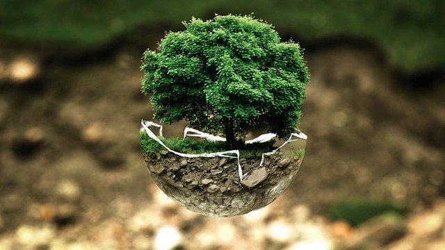 savoir écouter les arbre