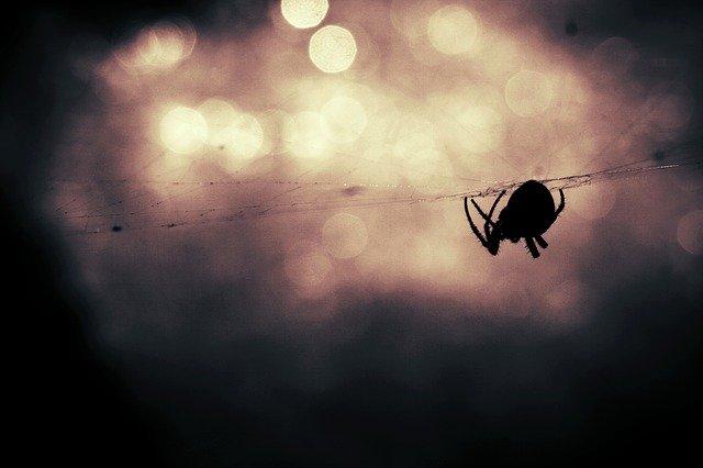 l'araignée tisseuse